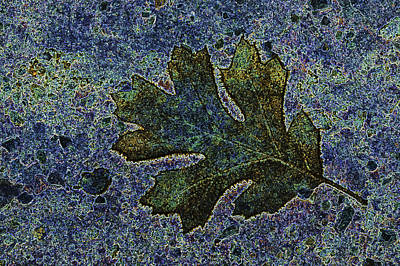 Photograph - Oak Leaf Abstract by Sherri Meyer