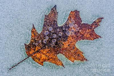 Photograph - Frozen Oak by Anthony Heflin