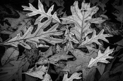 Photograph - Oak Leaf Patterns by Randall Nyhof