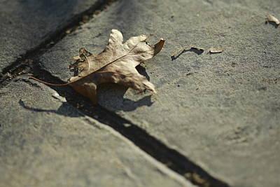 Valerie Rakes Photograph - Oak Leaf On Autumn Sidewalk by Valerie Collins