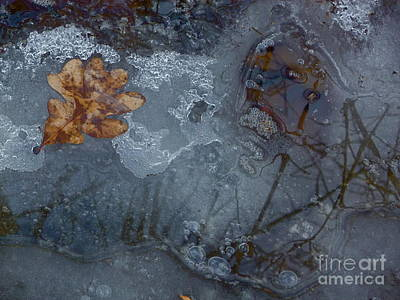Photograph - Oak Leaves In Frozen Water by Tim Good
