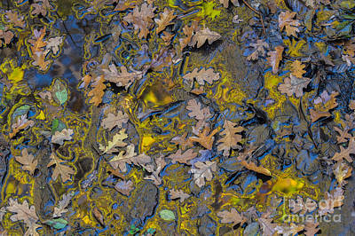 Photograph - Oak Leaves In Gold by Marianne Jensen