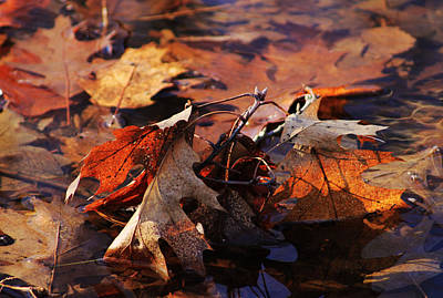 Photograph - Oak Leaves by Jim Vance