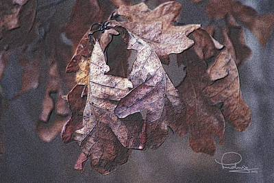 Photograph - Oak Leaves by Ludwig Keck
