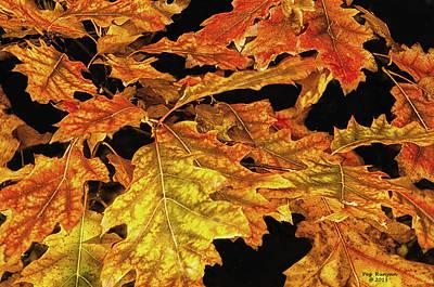 Photograph - Oak Leaves On Fire by Peg Runyan