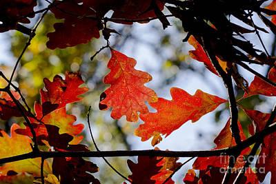 Photograph - Oak Leaves by Steven Ralser