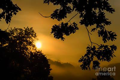 Oak Leaves Sunrise And Fog Art Print