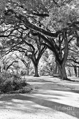 Oak Lined Path Art Print