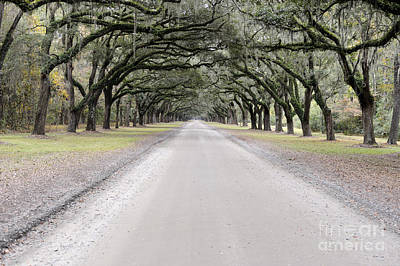 Photograph - Oak Lined Road by Nancy Greenland