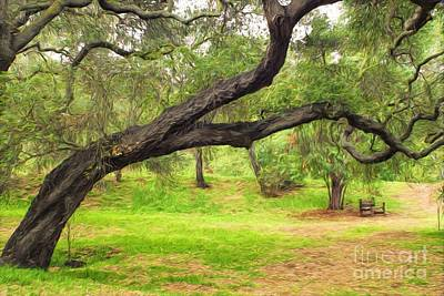 Photograph - Oak Meadow by Peggy Hughes