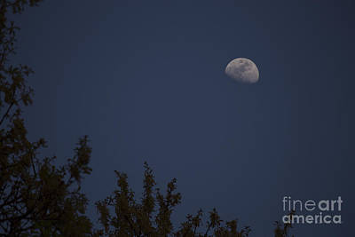 Photograph - Oak Moon - Color by D Wallace