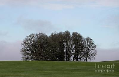 Photograph - Oak On A Knoll by Erica Hanel