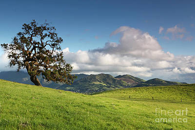 Oak Resting In The Evening Hills Mt Diablo Beyond Open Space California 2014 Art Print by Benjamin Race - Arc of Light Photography