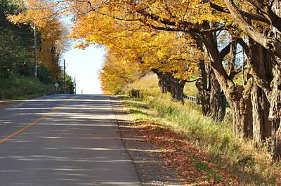 Photograph - Oak Road  by Puzzles Shum