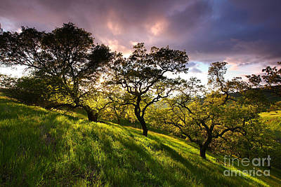 Oak Shadow Gallery At Sunset Mt Diablo State Park California 2013 Art Print by Benjamin Race - Arc of Light Photography