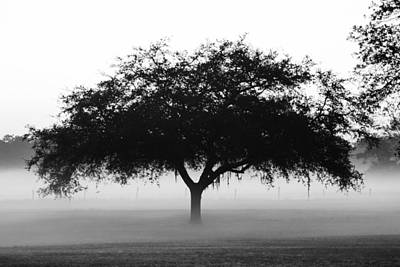 Photograph - oak by Shannon Harrington