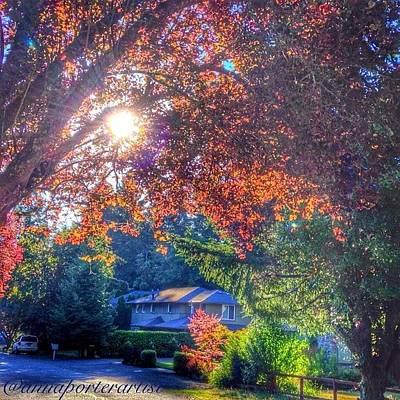 Sunny Photograph - Oak Street Early Evening Light by Anna Porter