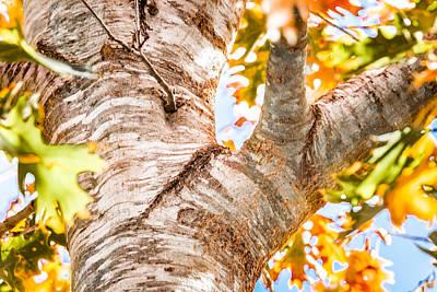 Photograph - Oak Study 2 by Melinda Ledsome