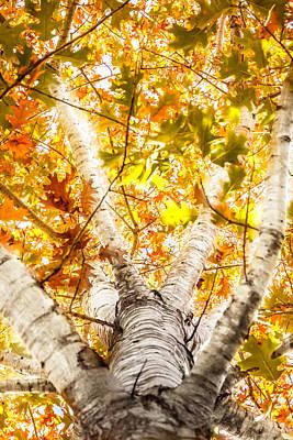 Photograph - Oak Study 3 by Melinda Ledsome