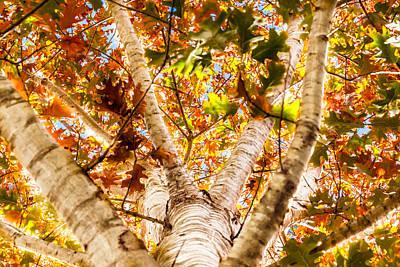 Photograph - Oak Study 4 by Melinda Ledsome