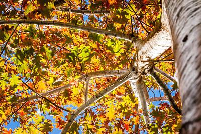 Photograph - Oak Study 5 by Melinda Ledsome