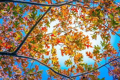 Photograph - Oak Study 6 by Melinda Ledsome