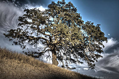 Photograph - Oak Tree And Moon by SC Heffner