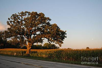 Photograph - Oak Tree At Dusk by Jeanette Clawson