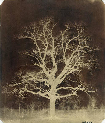 1842 Photograph - Oak Tree by British Library