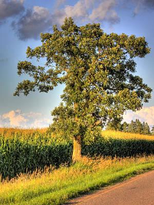 Oak Tree By The Roadside Art Print