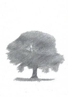 Oak Tree Drawing Number Four Art Print by Alan Daysh