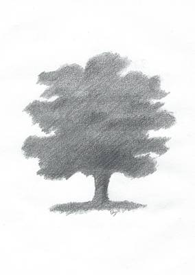 Oak Tree Drawing Number Seven Art Print by Alan Daysh