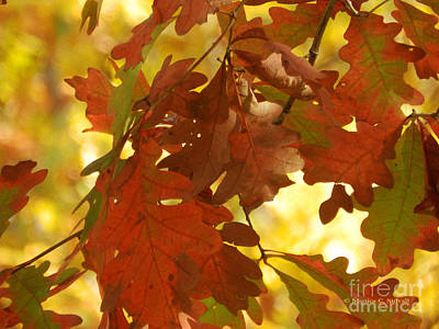 Photograph - Oak Tree Fall Leaves - M Landscapes Fall Collection No. Lf9 by Monica C Stovall