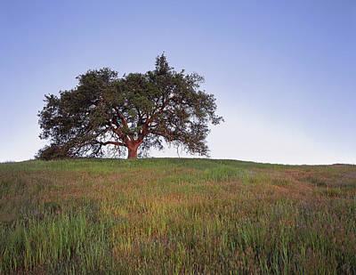 Oak Tree Glow Art Print