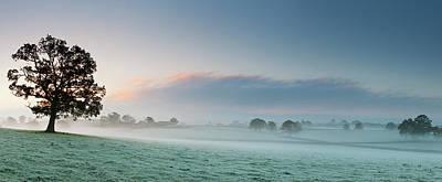 Photograph - Oak Tree In Mist by Jeremy Walker