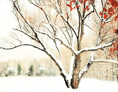 Oak Tree In Winter Art Print by Dorothy Walker