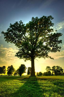 Grimm Fairy Tales - Oak Tree by Jakub Sisak