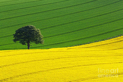 Field Flowers Photograph - Oak Tree Split by Richard Thomas