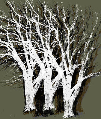 Photograph - Oak Tree Stamps by David Yocum