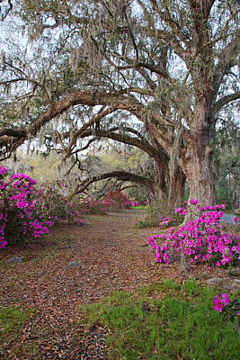 Oak Trees And Azaleas Art Print