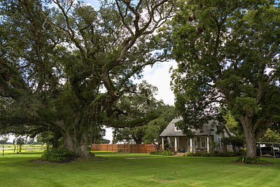 Art Print featuring the photograph Oak Trees Around Country House by Gregory Daley  PPSA