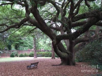 Park Scene Photograph - Oak Trees - Hopeland Gardens - Aiken South Carolina by Kathy Fornal
