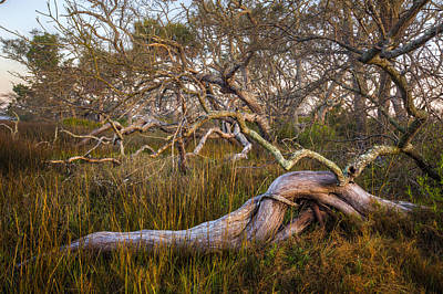 Oak Trees In The Marsh Art Print by Debra and Dave Vanderlaan