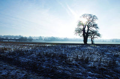 Photograph - Oak Trees On Boxing Day by David Hawkins-Weeks