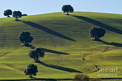 Heiko Koehrerwagner Photograph - Oak Trees On Grazingland by Heiko Koehrer-Wagner