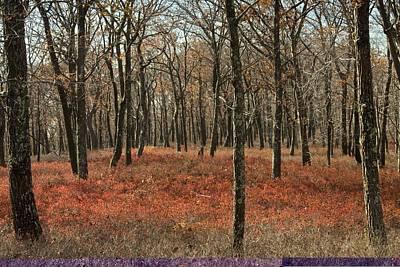 Oak Woodland In Autumn Art Print