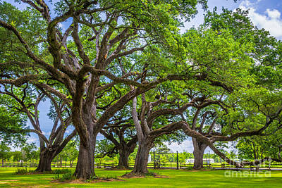 Louisiana Photograph - Oakland by Inge Johnsson