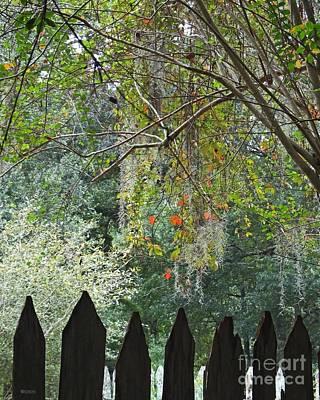 Photograph - Oakley Plantation Pickets Louisiana by Lizi Beard-Ward