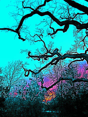 Oaks 4 Art Print by Pamela Cooper