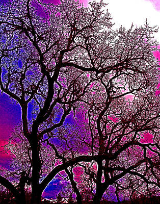 Oaks 6 Art Print by Pamela Cooper